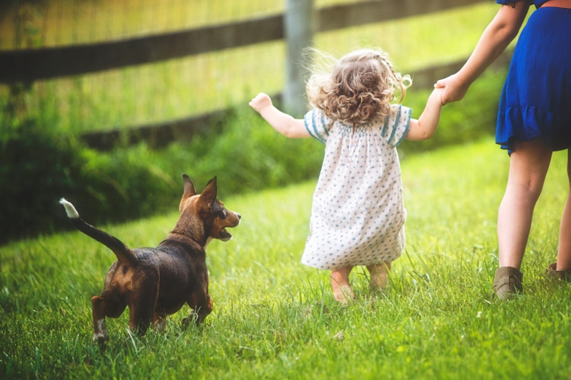Family Photographer, sister walking little sister in grass with puppy