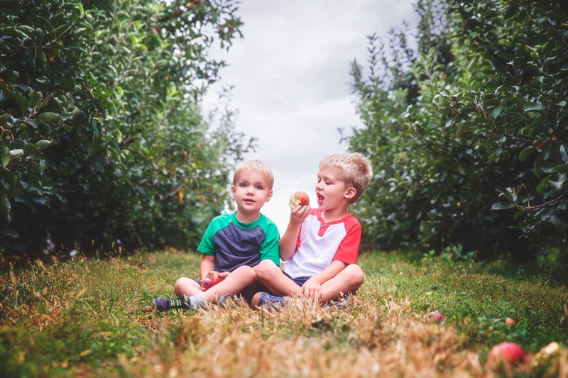 Family Photographer, boys eating apples in orchard
